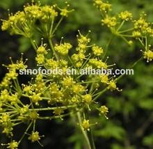 crude medicine herbs hamdard medicines