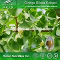 Proporcionamos alta calidad de extracto natural de Ginkgo Biloba / extracto seco de Ginkgo Ginkgoflavon Glycosides24%, Terpene Lacosides6%