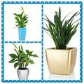 Decorativos de plástico retangular flor/jardim/plantador de maconha