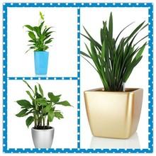 Dekoratif plastik dikdörtgen çiçek/bahçe/ekici pot