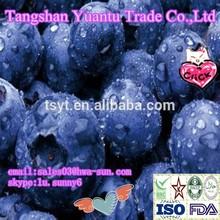 Frozen Blueberry, IQF Blueberry,Frozen Berries