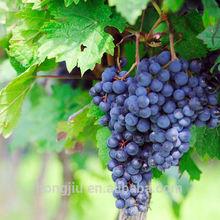 Organic Grape Seed Extract/Grape Seed Extract Powder