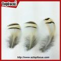 6-8cm teñido todo color dama reeves plumas de faisán los precios