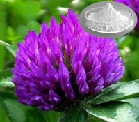 BV Certificated GMP China Factory Supply Red clover plant extract P.E.