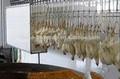 Ligne de traitement de l'abattage halal poulets abattoir