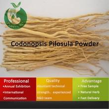 Super codonopsis pilosula extract powder/dang shen radix codonopsis