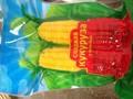 Camote IQF congelados de la mazorca de maíz