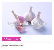 Fresh garlic white/Normal white garlic/Jinxiang Garlic