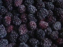 Frozen Blackberry/IQF blackberry Fruits Factory