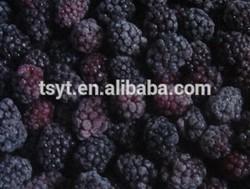 Frozen Blackberry/IQF blackberry Fruits Factory