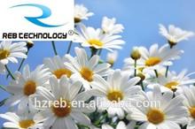 REB herbal extract Chamomile Extract 1.2%,3%,5%,98% Apigenin