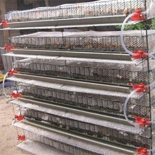 Quail Cage And Water System