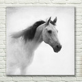 romântico 3d cavalo branco impresso lona arte da parede fotos