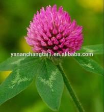 BV manufacturer supply lower price high quality pure natural Trifolium pratense