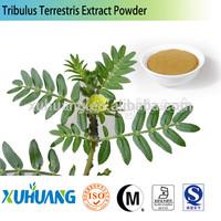 tribulus terrestris p.e.40%/tribulus terrestris seed/Tribulus Terrestris Saponin