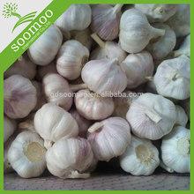 wholesale fresh natural garlic importer