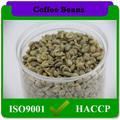 건조 스타일과 대량 포장 녹색 커피 콩 arabica 종류의