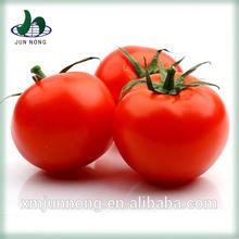 nouvelle arrivée marque ketchup aux tomates