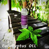Eucalyptus Oil wholesale Price
