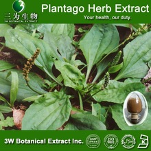 GMP Factory Supply Plantago Herb Extract, Plantago Seed Extract 4:1,5:1,10:1