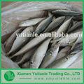Comprar venta al por mayor de la exportación de china pescado congelado