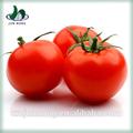 liste des prix alimentaires en conserve prix des tomates fraîches