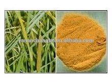 GMP factory supply Hot sale High quality Salvia miltiorrhiza bunge