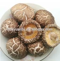 Indstrial Microwave Vacuum Drying Equipment for mushroom