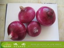 Fresh Red and Yellow Onion Seller From China