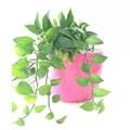 Arrosage auto pot de fleurs dans des pots de fleurs& planteurs