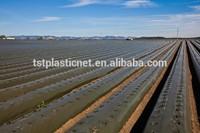 black mulch film for strawberry farm plants