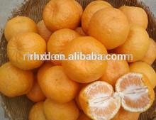 Fresh Chinese navel orange