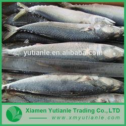 Hot china products wholesale Sea Food Suppliers In Saudi Arabia
