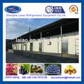 frutas y hortalizas frescas a pie en la fría sala de almacenamiento