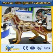 Cetnology Dog Acupunture Model/Pvc Animal Model for Nursing