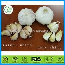 natural garlic price/fresh garlic