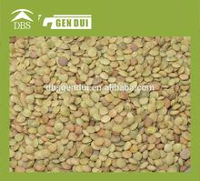organic green lentil