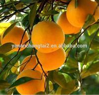 Manufacturer supply food grade grapefruit Extract Powder