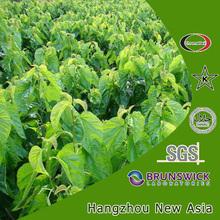 High Quality Mulberry Leaf Extract 1-Deoxynojirimycin (1-DNJ) 1%,2%,5%, Polysaccharides 20%