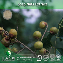 Soap Nuts Extract (70% Saponins) Supplied By 3W GMP Factory