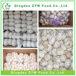 Wholesale Peeled Garlic Price Export/normal white garlic china garlic price 2014