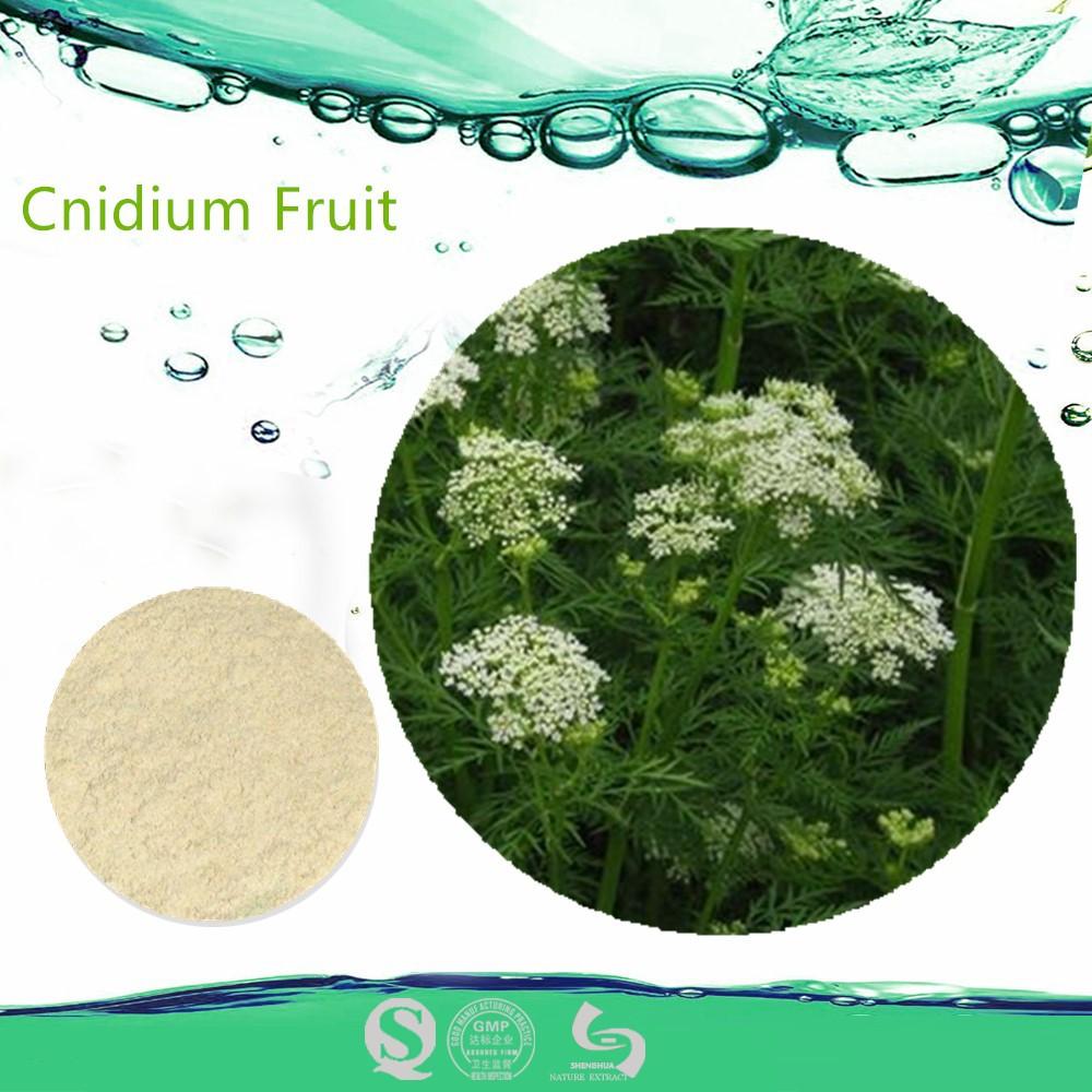 Le pénis durcit 40% des fruits cnidium extrait osthole