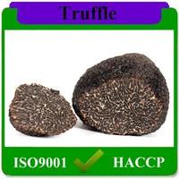 top quality organic frozen black truffle