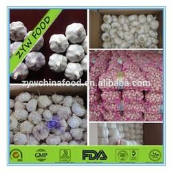 China Bulk Fresh pure white normal white garlic 4cm 4.5cm 5cm up in carton or mesh bag for UAE Market