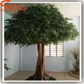songtao fornecedor de live ficus árvore de plástico grande de árvore