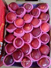 Apple Type and Pome Fruit Product Type organic Shanxi Fuji apple
