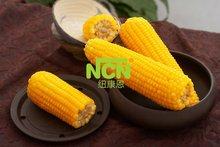 IQF Organic Sweet Corn Cob