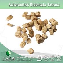 20% Achyranthes Bidentata Achyranthan Of 3W GMP Factory In Fine Powder