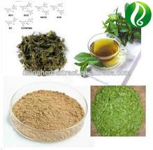 Green Tea Extract Tea polyphenol 10%-90%