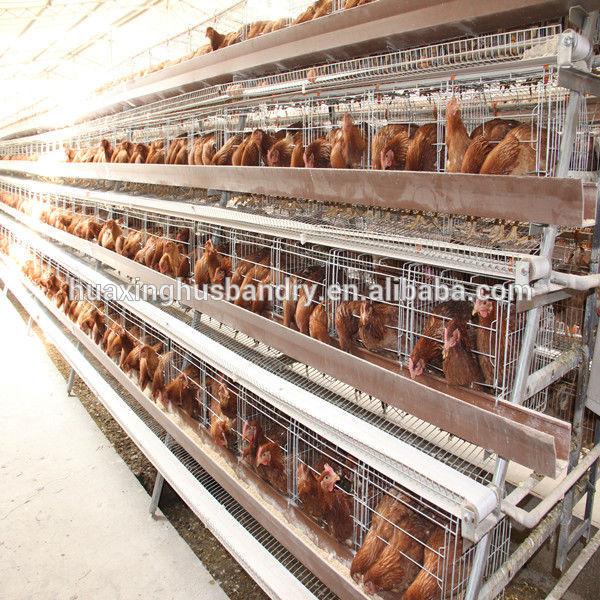 Poultry House Farm House Design Poultry